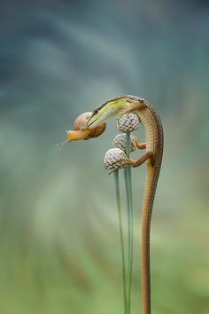 Fotografia Untitled de Hendy Mp na Animals Images, Animals And Pets, Funny Animals, Cute Animals, Geckos, Beautiful Creatures, Animals Beautiful, Animal Photography, Nature Photography