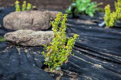 Umweltfreundlich gärtnern: Wie bekämpfe ich Unkraut ohne Chemie?