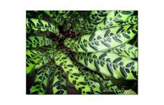 Zimmerpflanzen im Winter transportieren Plant Leaves, Winter, Plants, Tropical House Plants, Pot Plants, Shade Perennials, Exotic, Orchids, Plant