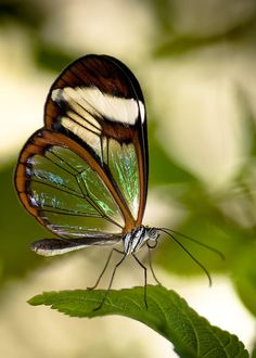 They seemed to come suddenly upon happiness as if they had surprised a butterfly in the winter woods.  ~Edith Wharton