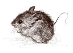 mouse by Jason Seiler | Richard Solomon Artists Representative