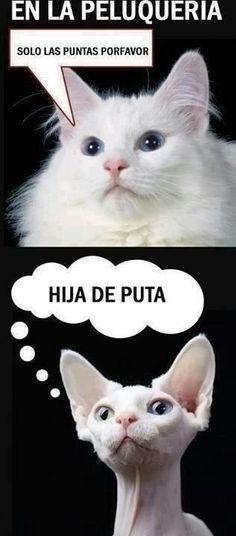 the cats peluqueria.