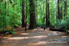 Jedediah Smith 004 - Jedediah Smith Redwoods State Park Campsite Photos - campsitephotos.com