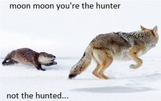 Moon Moon being hunted by an otter!!!!!