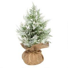 90 best christmas tree shop ideas
