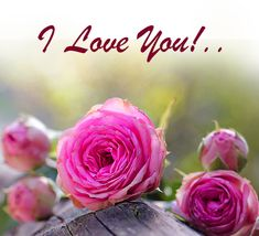 I Have No One, One Wish, Always Love You, Say I Love You, Love You So Much, I Want U, Romantic Words, Perfect Word, You Are Special