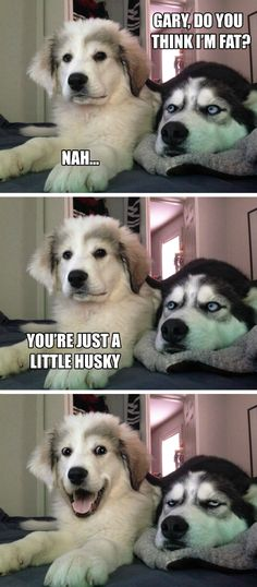 Just a little husky? Check out this list of the best exercises for the Siberian - Funny Husky Meme - Funny Husky Quote - The post Just a little husky? Check out this list of the best exercises for the Siberian appeared first on Gag Dad. Dog Jokes, Funny Animal Jokes, Funny Dog Memes, Cute Funny Animals, Funny Animal Pictures, Funny Cute, Funny Images, Cute Dogs, Funniest Memes