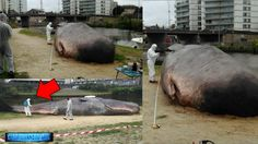 WHAT THE HELL!! 60 Ton Whale Teleports To Oklahoma? Police Shocking Repo...