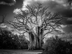 Tree of Knowledge by Sean Konig on 500px
