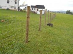 Miraculous  Field Fence Roll and field fence for hogs