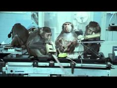Basement Jaxx - Where's your head at The videos about a science lab thats experimenting with turning people into animals so the title reflects the video. the lyrics also do this, 'we can't live on, live on without you' which refers to the animals talking to the humans and vice versa saying they can't survive without each other.