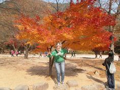 Hiking Seoraksan National Park - Fun Things To Do in Korea - Journalist On The Run Seoraksan National Park, South Korea, Stuff To Do, Things To Do, National Parks, Hiking, The Incredibles, Adventure, Places