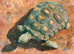 Desert Tortoise Art Print/ Southwest Watercolor Limited Edition Giclee by RambleAndFrolic on Etsy