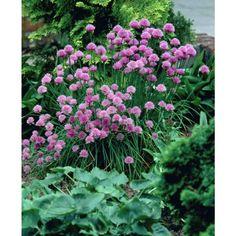 Garden, Flowers, Plants, Summer, House, Summer Time, Home, Garten, Flora