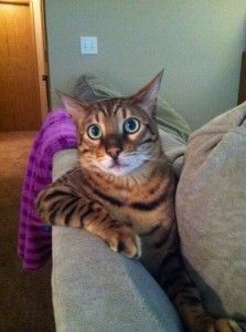 I don't always cough up hairballs, but when I do, it's always on the sofa.