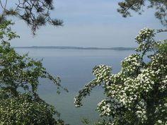 Am Südufer des Selenter Sees zwischen Bellin und Selent.  Bekannt ist der See unter anderem auch für seinen Fischreichtum. Es finden sich in ihm Aale, Barsche, Hechte, und große und kleine Maränen sowie in größeren Mengen auch Plötze.