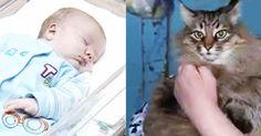 Una gatta randagia salva dal freddo un bimbo abbandonato in una scatola