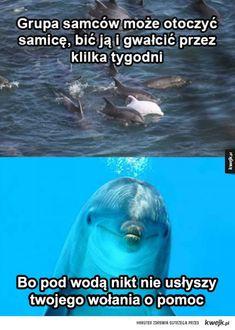 Funny Memes, Jokes, Fun Facts, Haha, I Am Awesome, Geek Stuff, Humor, Animals, Geek Things