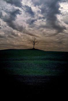 very bad day - single tree