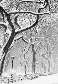 I haven't walked in a snowy park since .. Maybe high school .. I think it's on my bucket list.. Every one should visit the past at least one time..