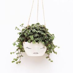 "17.1k Likes, 185 Comments - @etsy on Instagram: ""Plant goals. Or hair goals. Either one. From Etsy seller @berriesforbella. Link in bio."""