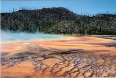 Grand Prismatic Spring, Yellowstone National Park. Got this from a boardwalk; must note the regrowth of the treeline after the park's infamous fire.