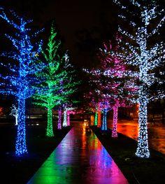 christmas lights | Date Night…Martinis & Christmas Lights