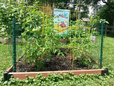 Tomato bed 2014