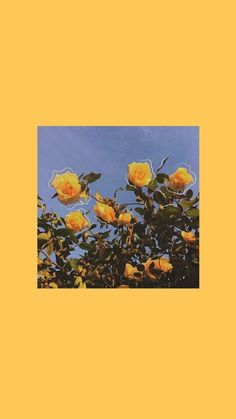 Yellow Aesthetic Wallpaper Iphone 62 Ideas For 2019 Iphone Wallpaper Vsco, Cute Wallpaper Backgrounds, Animal Wallpaper, Colorful Wallpaper, Black Wallpaper, Mobile Wallpaper, Wallpaper Quotes, Iphone Wallpapers, Vintage Phone Wallpaper