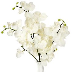 Orchids are my favorite plant to use for home decor. They are beautiful, classy and don't give us any trouble with allergies.