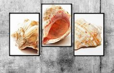 Shell, Ethnic Recipes, Nature, Prints, Photography, Etsy, Food, Naturaleza, Photograph