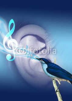 Audio Health Amazing Photos, Cool Photos, Hearing Aids, Adobe, Audio, Dreams, Health, Fotografia, Health Care