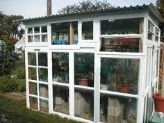 Garden shed/greenhouse made out of old windows and tin roof.