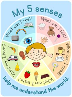 These colorful posters showing the 5 senses would be a great addition to your science center during a unit on senses. Instructions for printing and use Print on paper. This poster is part of a set of senses resources available in my store. Science Activities For Toddlers, Senses Activities, Lesson Plans For Toddlers, Kindergarten Activities, Five Senses Preschool, My Five Senses, Preschool Charts, Body Preschool, English Lessons For Kids