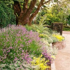 Add fragrance to your pathway by tucking in a few aromatic plants.