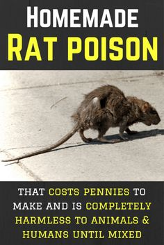 Homemade Rat Poison That Works & Costs Pennies