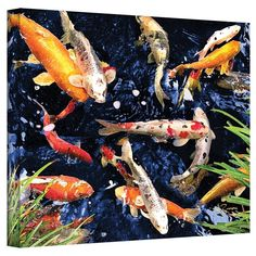 A symbol of love and friendship in Japan, koi are beautiful fish that display a variety of different colors and patterns on their scales. To bring a touch of their elegance to your home (without having to build a pond) try hanging this lovely canvas print. A photographic motif, it showcases a few koi fish swimming around in placid waters. Made in the USA, this image is giclee printed on wrapped canvas. Canvas Poster, Canvas Art Prints, Canvas Wall Art, Canvas Canvas, Koi Painting, Painting Prints, Fish Paintings, Mermaid Paintings, Animal Paintings
