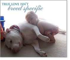 True love isn't breed specific #bsl #pitbulls