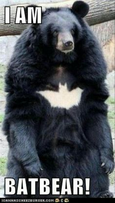 I just came from the Bat Cave, anyone seen  Robin?