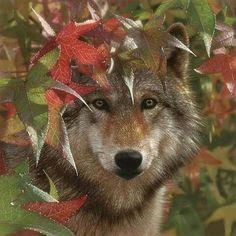 More wolves for Tuukka.