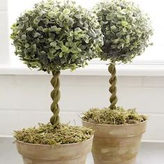 50 Dollar Store DIY Farmhouse Decor Ideas Topiary Trees faux greenery balls + pots + floral foam + skewers + moss + clay + paint (green, brown, white) Everything but the clay and paint is sold at dollar stores Dollar Tree Decor, Dollar Tree Crafts, Home Decor Hacks, Decor Ideas, Decorating Ideas, Decorating Websites, Craft Ideas, Topiary Trees, Floral Foam