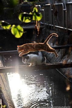 kitty over-pass