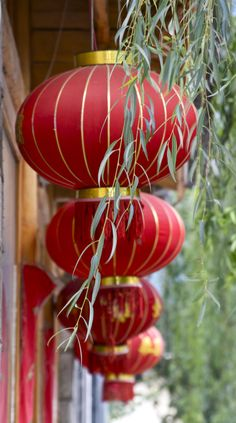 .Red lanterns.                t