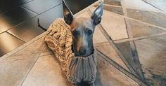 Shop the turtleneck sweater that Kylie Jenner's dog Norman wore in an April 6 Instagram