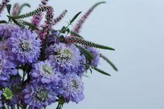 • Ditto Ditto favourites • Scabiosa and Veronica - two of our fav ladies looking  together! Looking For Women, Veronica, Florals, Our Wedding, Bloom, Plants, Floral, Flowers, Plant