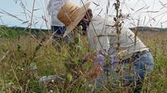 The Archaeology of Wild Foods: Get a taste of Native camas cooking