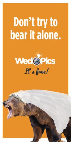 100 free bear dating site