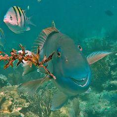 A smiling fish  at Florida Keys #WildlifeRefuge Complex