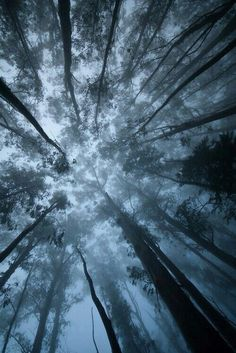 Looking up at the trees.