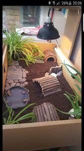 Resultado de imagem para terrario caseiro para jabuti